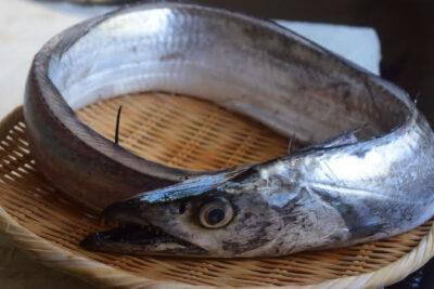 食べ過ぎるとダメ?太刀魚の栄養やカロリーについて