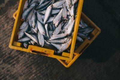 カンパチやヒラマサは別の魚?