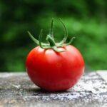 トマトのカビの原因は?白・黒の違い|ヘタをとって洗えば食べられる?