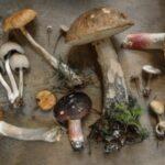 椎茸の黒い部分は食べれるのか|しいたけの斑点や茶色く変色したものなどについて解説します