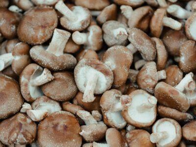茶色に変色した椎茸は食べても大丈夫?