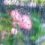 雨の日に窓開けっ放しだと湿度や湿気はどうなる?開けて寝るのはNG?開けると閉めるどっちが正解なのか